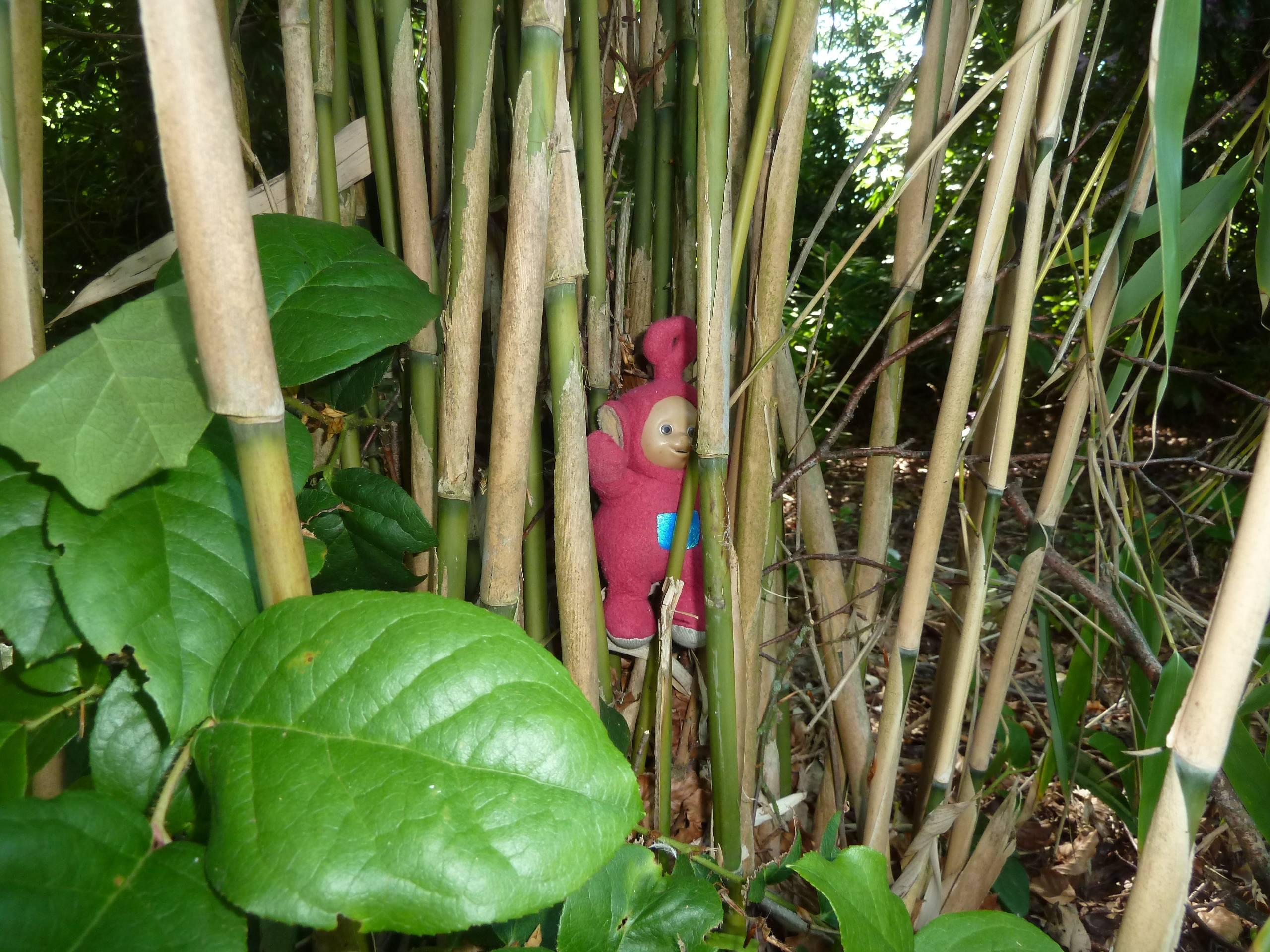 Po hiding in the unnature trail (literacy)