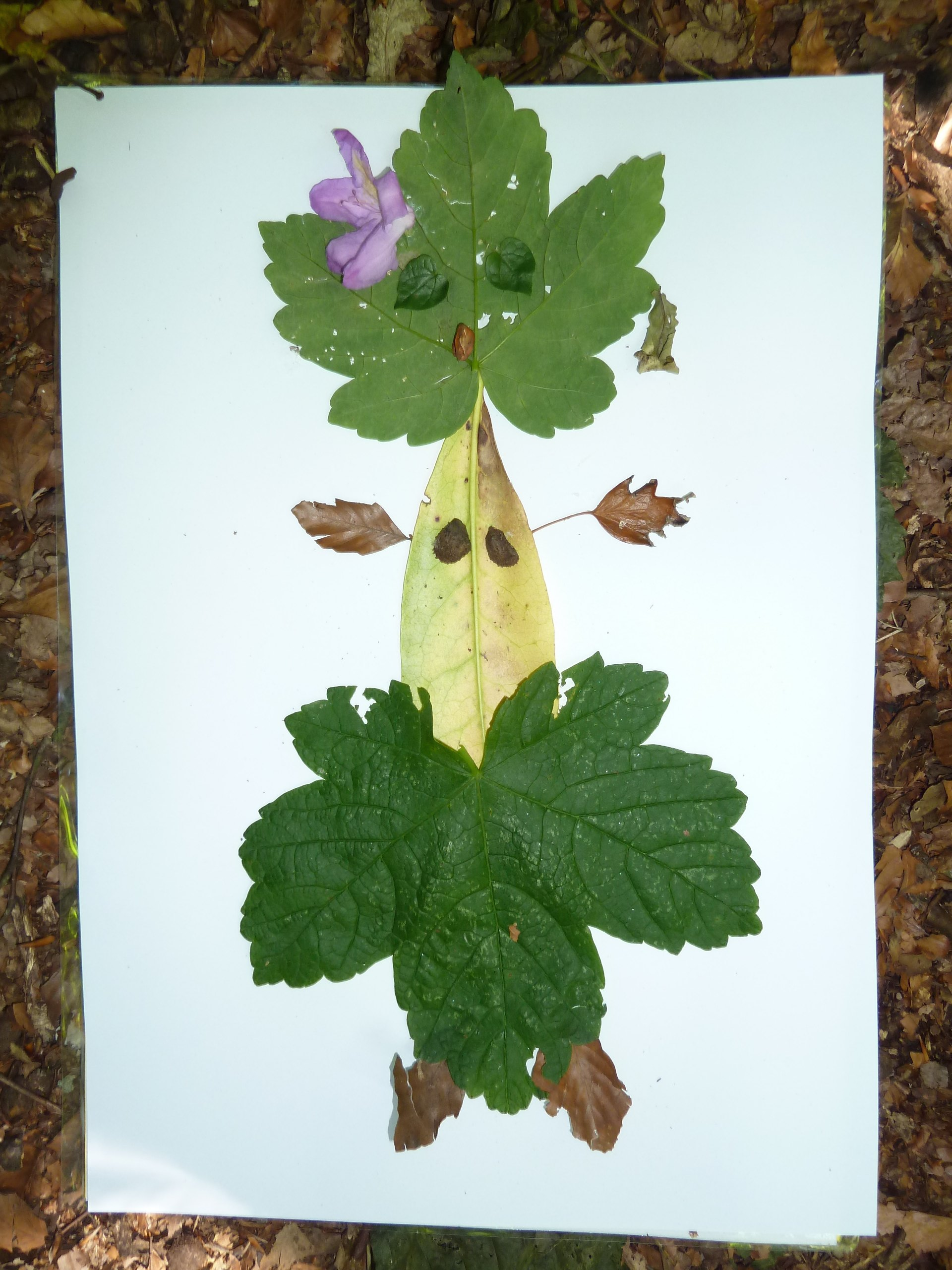 making our own leafmen (literacy)
