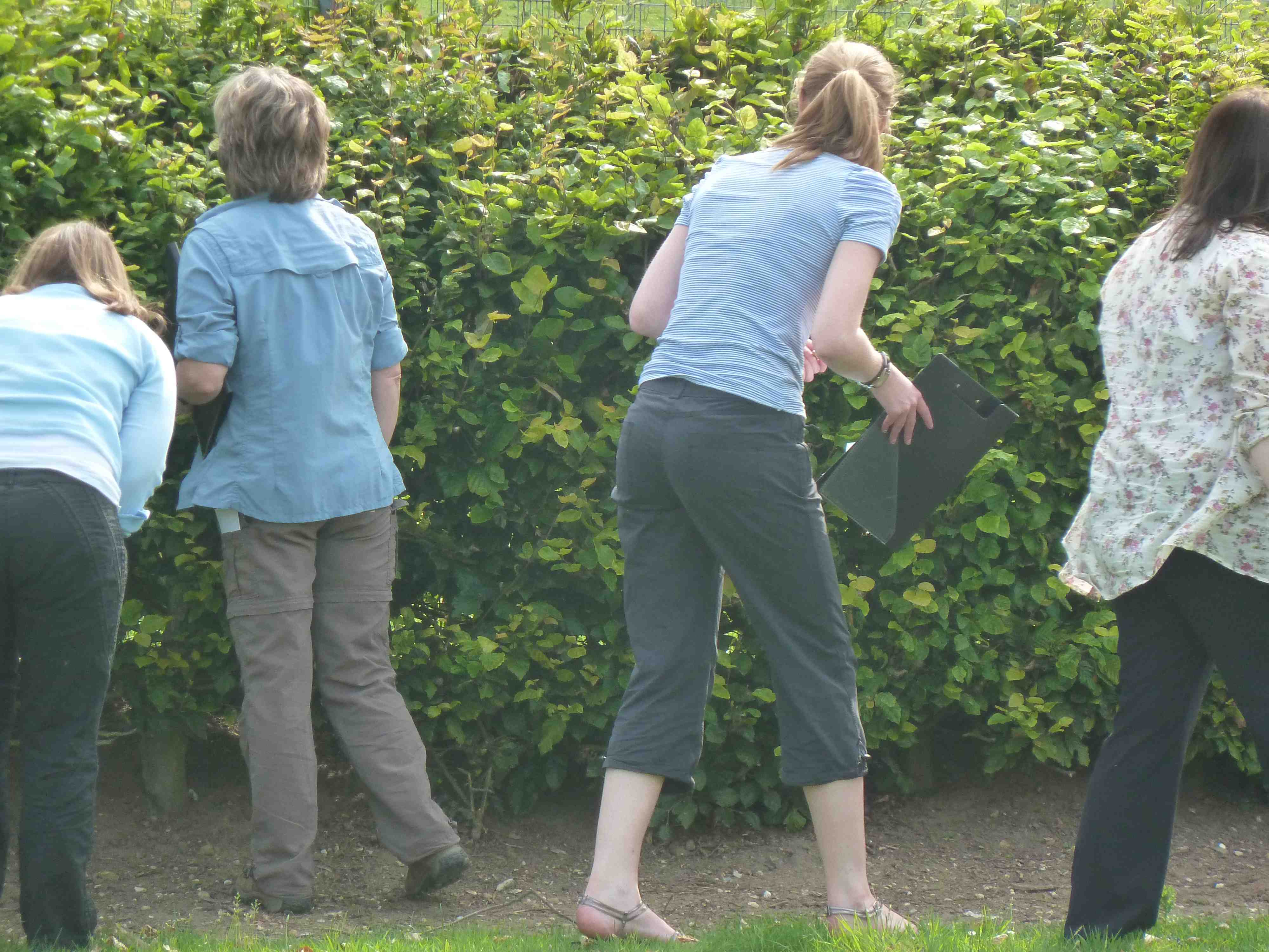 peering in the hedge to undertake the 'unnature trail' (literacy)