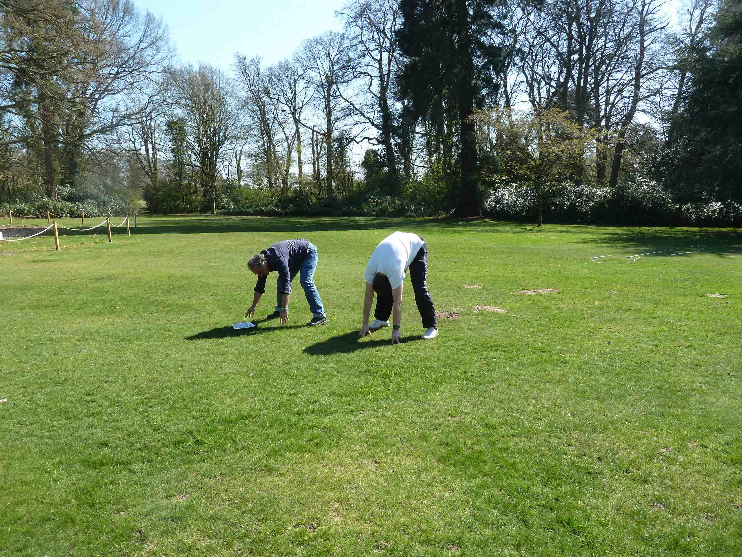 yoga or assessing tree height (maths)